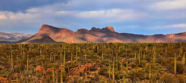 Hotels Near Saguaro National Park East