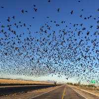 Birding Hotspots in Marana, Arizona
