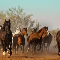 Dude Ranching in and around Marana